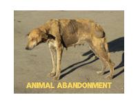 Texas Animal Law Animal Abandonment